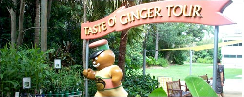 Travel to the Buderim Ginger Factory with our Brisbane car hire service.