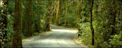 Discover the Gold Coast Nature with our car hire Gold Coast service.