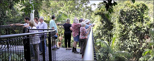 Travel to the Tamborine Mountain Rainforest Skywalk with our Gold Coast car hire service.