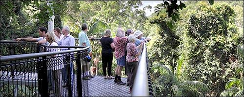 Tamborine Mountain Rainforest Skywalk 171 Travellers Guide